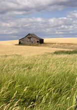 Rustic Barn In The Farmland.