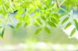 hojas y agua