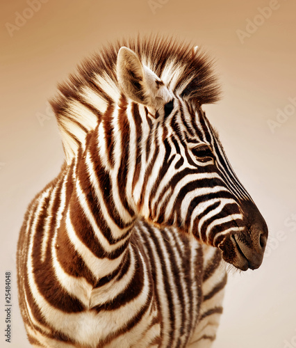 Canvas Prints Zebra Zebra portrait