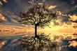Leinwandbild Motiv mystic moments