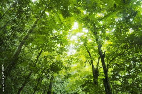 Fotorollo basic - Forest sunlight (von WONG SZE FEI)