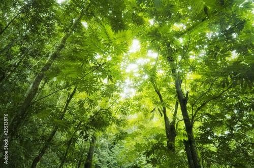 Foto-Kissen - Forest sunlight (von WONG SZE FEI)