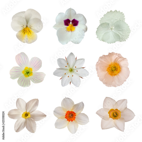 Papiers peints Pansies White flower collection
