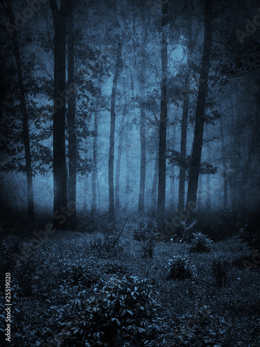 Fotografie, Obraz  Dark Forest