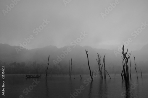 Photo  Dead trees in the lake