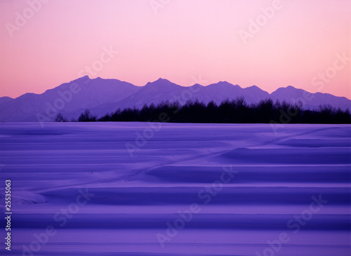Poster Rose clair / pale 紫の諧調
