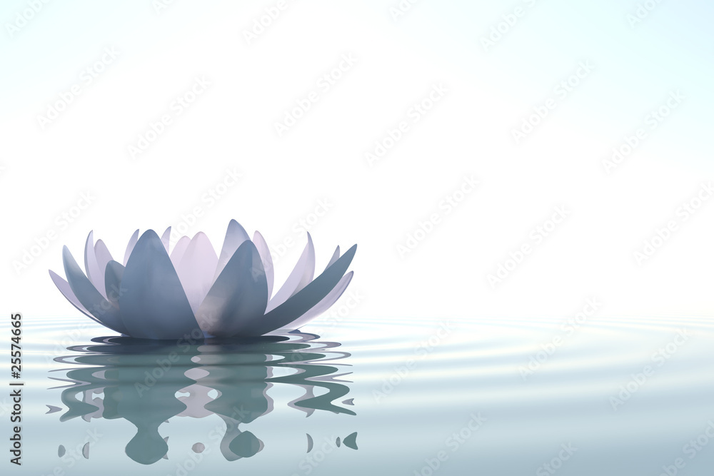Fototapeta Zen flower loto in water