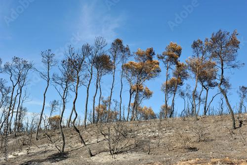Fotografie, Obraz  après l'incendie