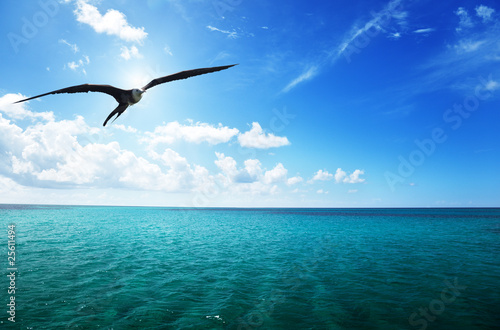 albatross and caribbean sea Tablou Canvas