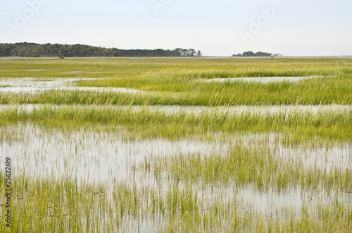 Wetland Conservation Fototapeta