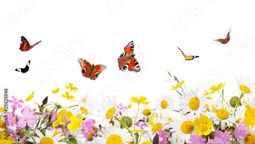 Plakat kwiaty i motyle