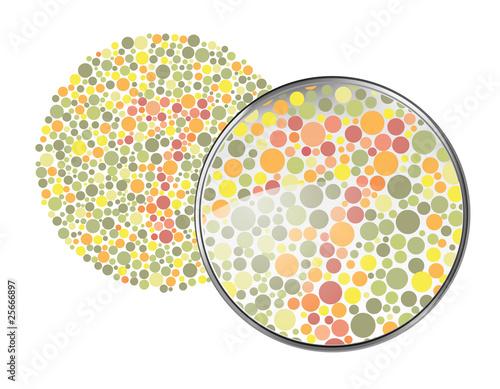 Foto  Vision d'un non daltonien