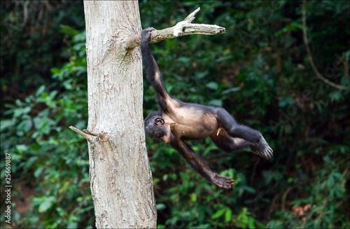 Foto op Aluminium Aap The acrobat