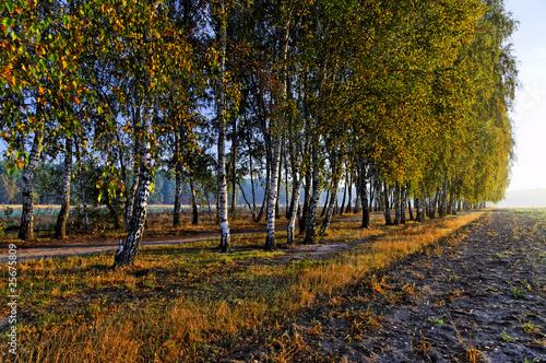 autumn scene - 25675809