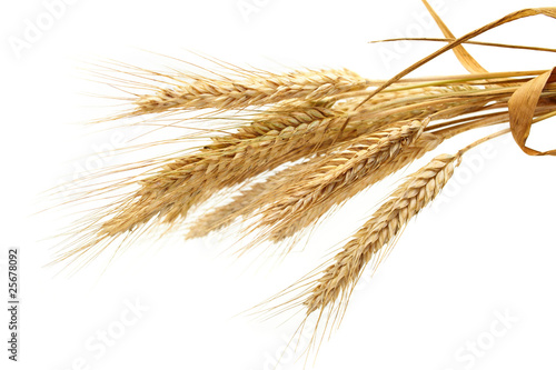 Fototapeta wheat isolated on white obraz