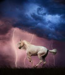 Obraz na płótnie Canvas White horse under thunder sky with lightning