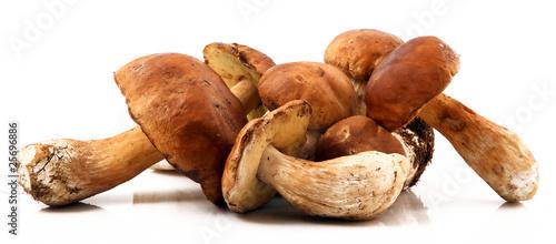 Obraz na plátně funghi porcini freschi