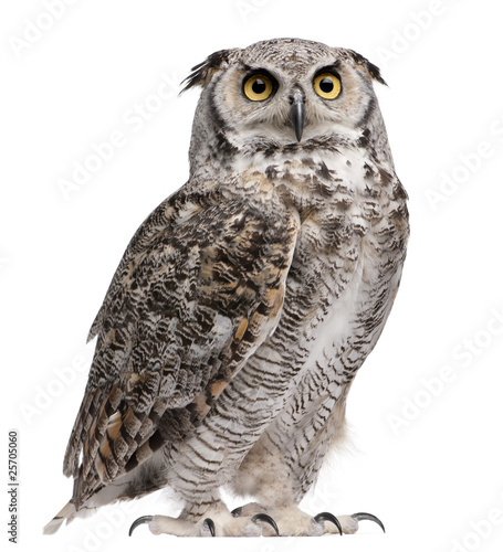 Deurstickers Uil Great Horned Owl, Bubo Virginianus Subarcticus