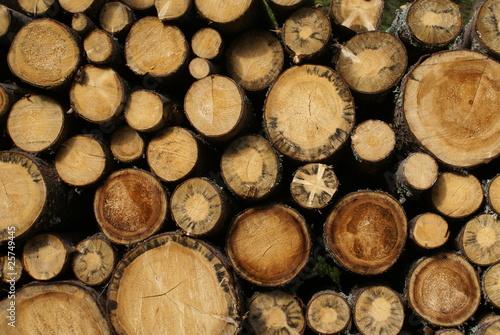 ścięte drzewa - fototapety na wymiar