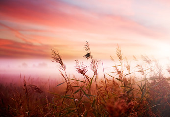 Panel Szklany Wschód / zachód słońca Foggy Landscape.Early Morning Mist.