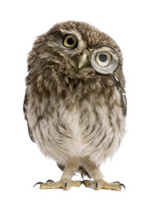 Little Owl Wearing Magnifying ...