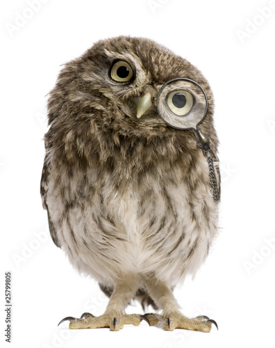 Spoed Foto op Canvas Uil Little Owl wearing magnifying glass, Athene noctua