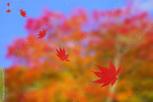 Aluminium Prints Autumn もみじ