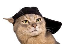 Abyssinian Cat In Baseball Cap...