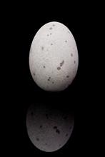Thousand-year Egg