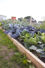 Allotment In Summer