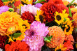 Leinwandbild Motiv Dahlien, Herbstfarben, Schnittblumen