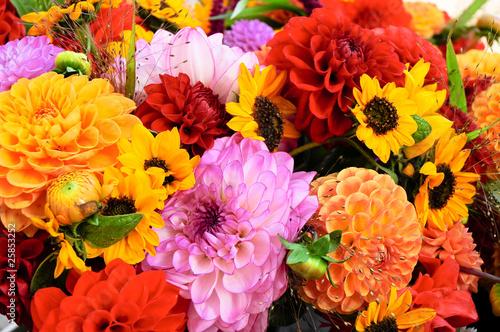 Poster de jardin Dahlia Dahlien, Herbstfarben, Schnittblumen