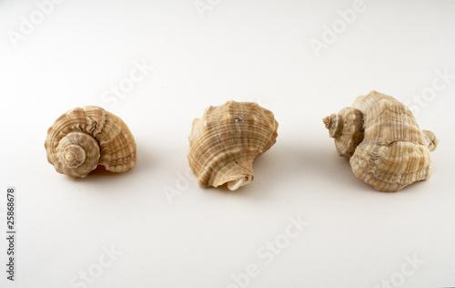 Fotografija  3 perspectivas sobre um búzio