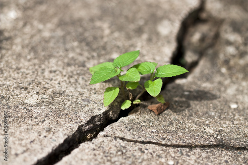 Photo  weed growing through crack in pavement
