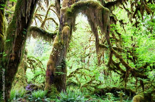 Naklejki dżungla  stara-dzungla