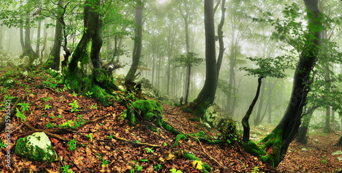 Poster Olive Misty forest