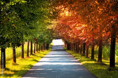 droga-z-pieknymi-jesiennymi-drzewami