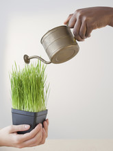 African Woman Pouring Water On Grass In Pot