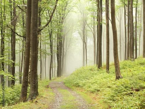 Foto auf Acrylglas Wald im Nebel Path through foggy early autumn forest