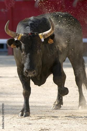 Fotobehang Stierenvechten taureau