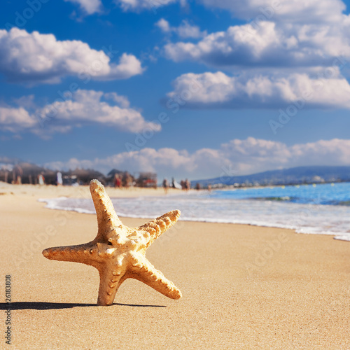 Fototapety, obrazy: tropical beach with star fish