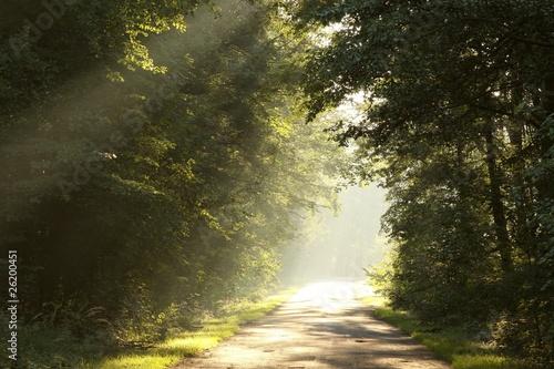 Foto auf Acrylglas Wald im Nebel Sunlight falling on the rural road in misty forest