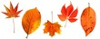 canvas print picture - set of red autumn leaves