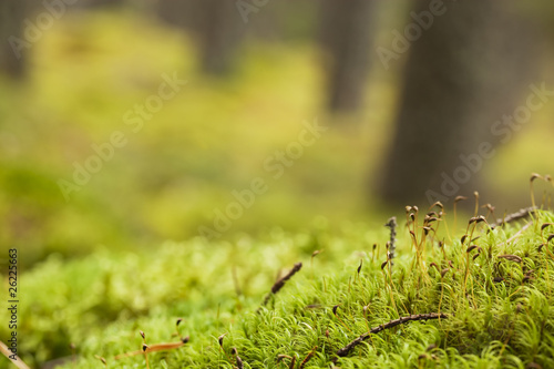 Aluminium Prints Autumn Autumn scene with moss in the foreground.