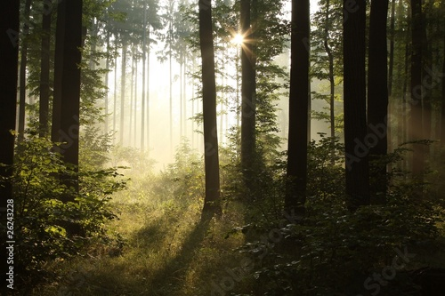 Foto auf Acrylglas Wald im Nebel Sunbeam falls into misty spring forest