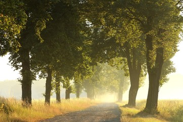 FototapetaRural road in the morning leading to misty forest