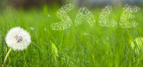 Keuken foto achterwand Paardebloem Dandelion seed in form a sale sign