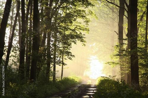 Foto auf Acrylglas Wald im Nebel Dirt road through the woods on a foggy morning