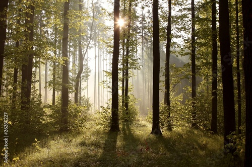 Papiers peints Foret brouillard Sunbeams entering into forest on a misty morning