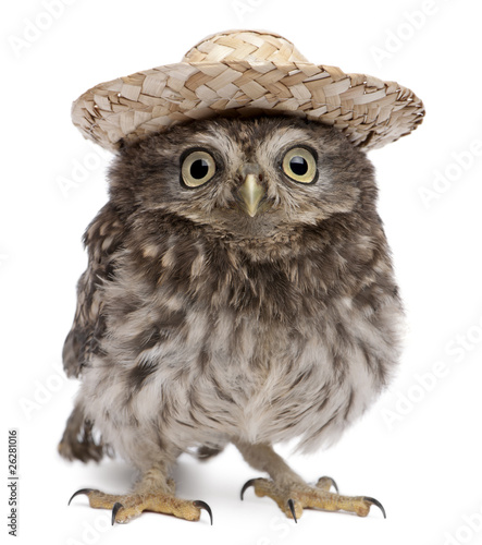 Fotobehang Uil Young owl wearing a hat in front of white background
